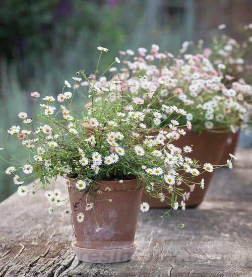 garden pot design-423197696234472705