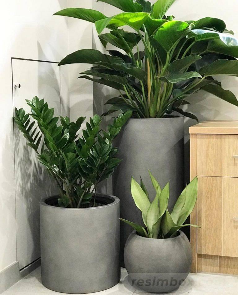 garden pot design-369858188144240773