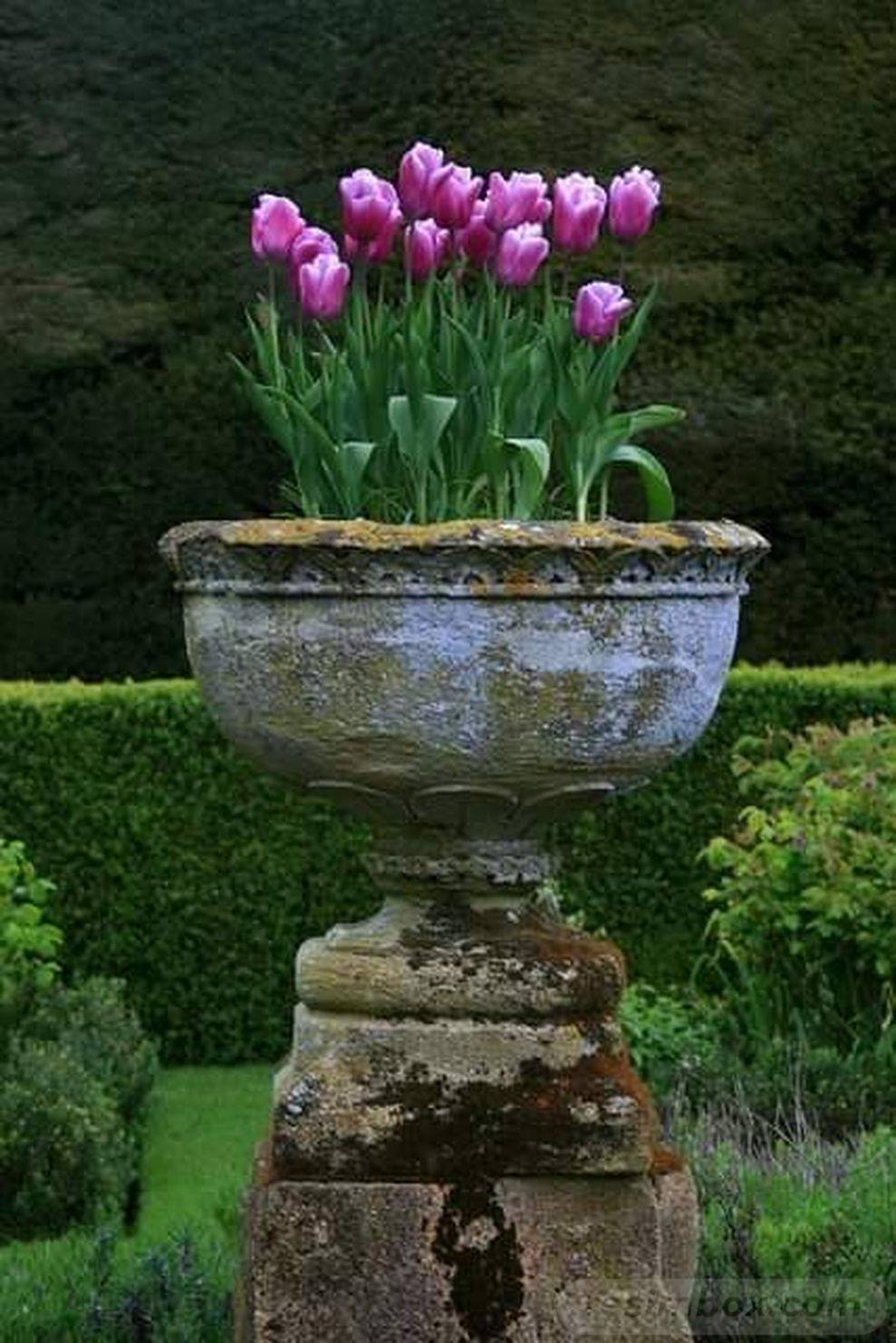 garden pot design-AYFI8TKpq7sEf8ojBU2-JJbe8JPKW4CK47v5S0Yx-P2HXHEazmoSIqg