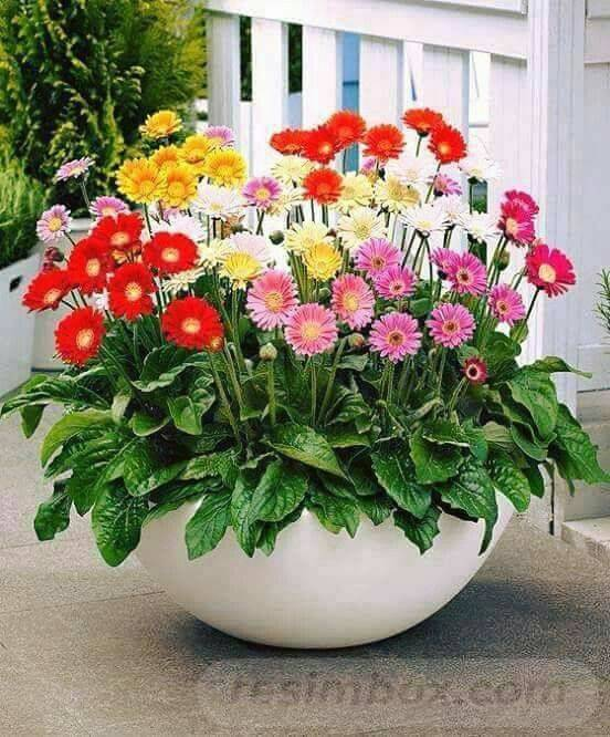 garden pot design-670895675717591325