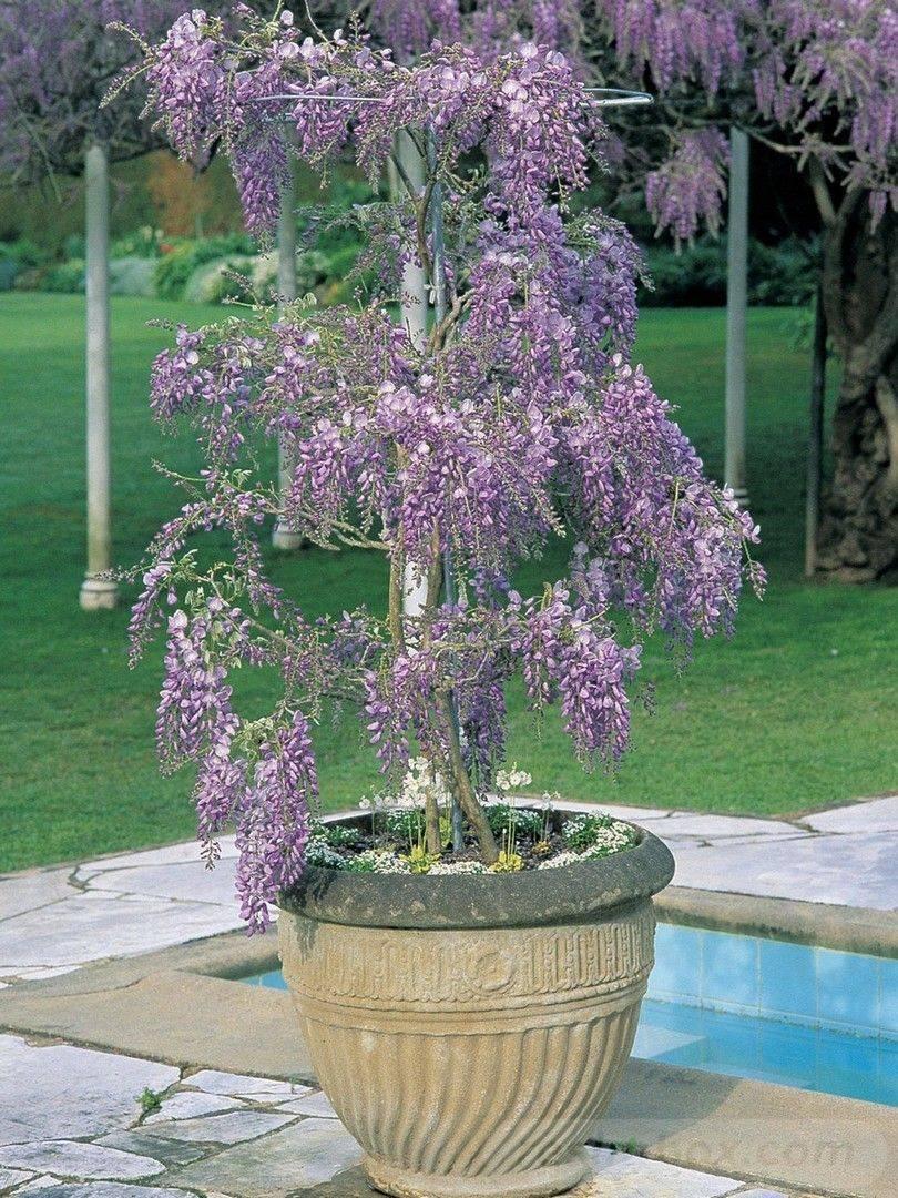 garden pot design-812759063979262334