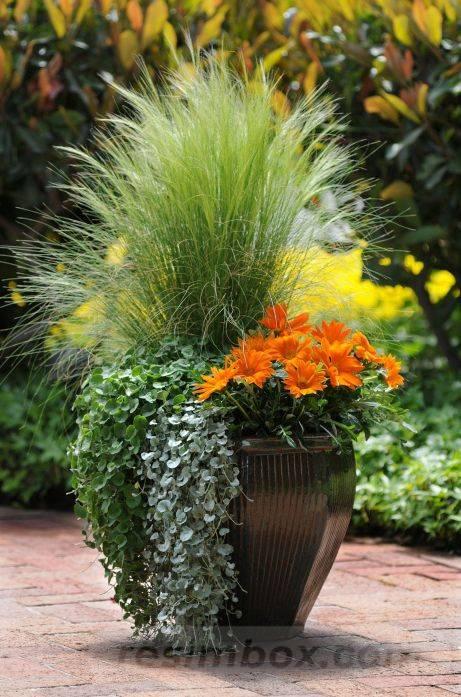 garden pot design-499899627370268017